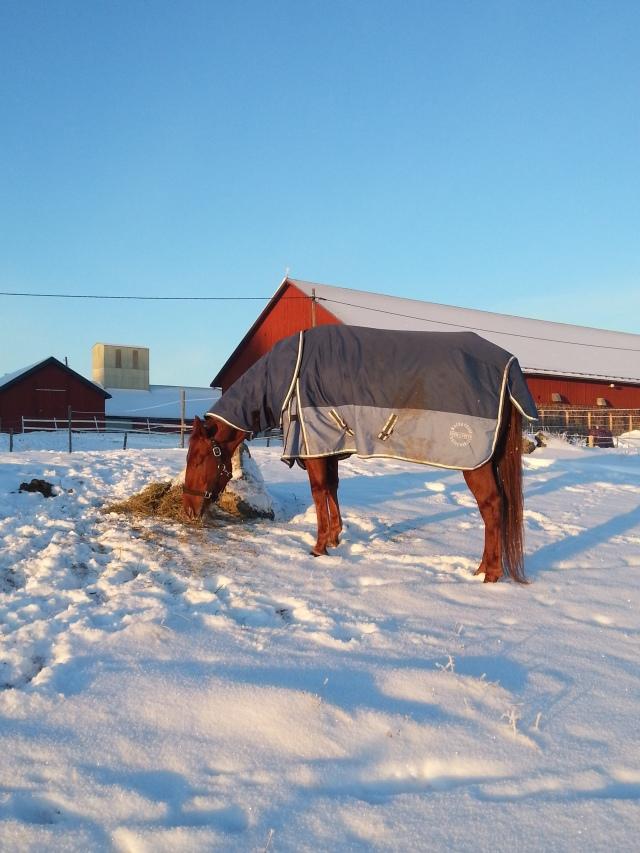 First winter at Näs Gård