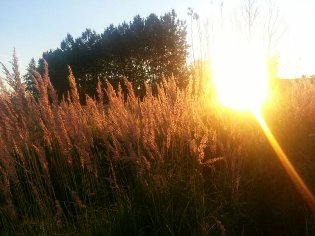 20130721_Evening sun