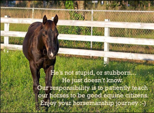 equine citizens